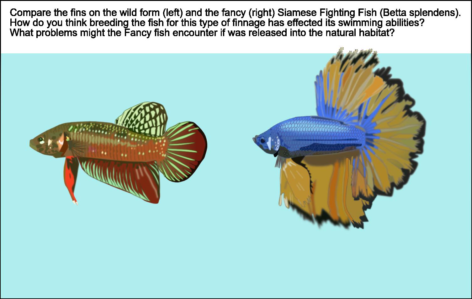 Reading Fish   Canberra & District Aquarium Society